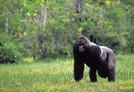 shimpanz.jpg